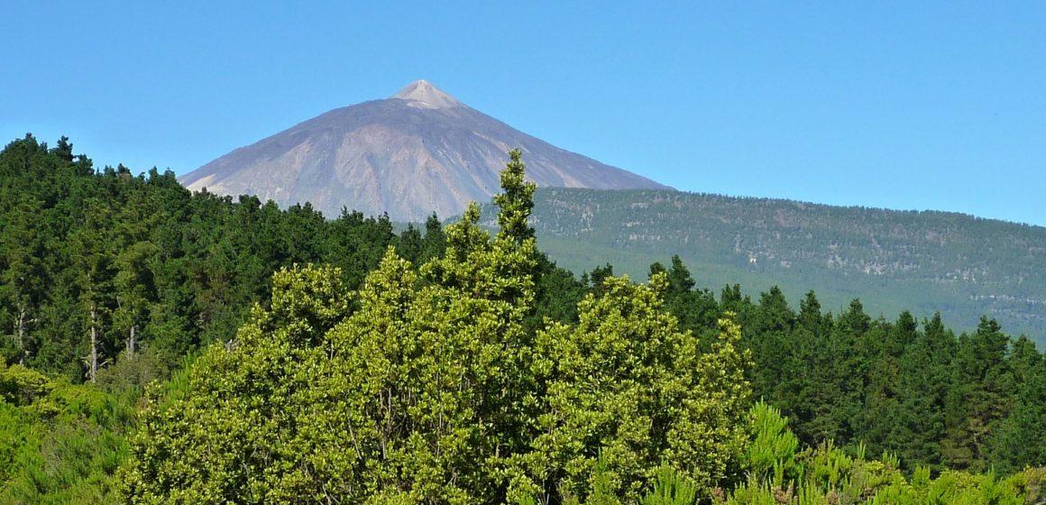 Transición Ecológica fomenta la participación ciudadana sobre la norma de gestión forestal sostenible de Canarias
